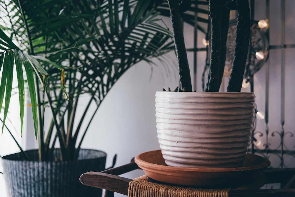 Our favorite Minimalist Planters